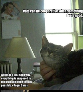 Cats can be cooperative when something feels good,