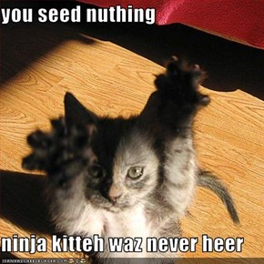 you seed nuthing  ninja kitteh waz never heer