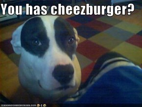 You has cheezburger?
