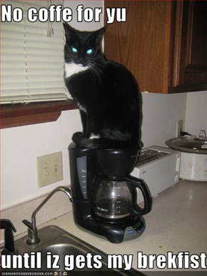 No coffe for yu  until iz gets my brekfist