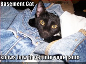 Basement Cat  knows how to get into your pants