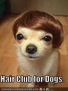 Hair Club for Dogs.