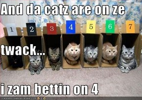 And da catz are on ze  twack... i zam bettin on 4