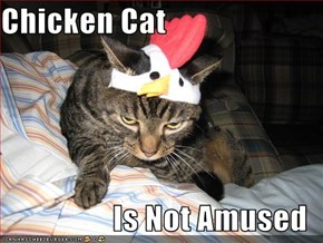Chicken Cat  Is Not Amused