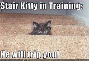 Stair Kitty in Training:  He will trip you!