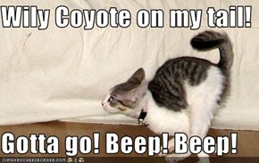 Wily Coyote on my tail!   Gotta go! Beep! Beep!
