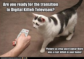 Are you ready for the transition to Digital Kitteh Televison?