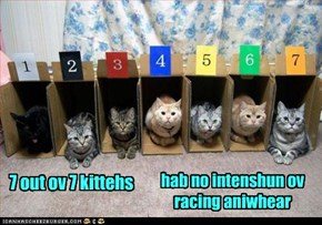 7 out ov 7 kittehs