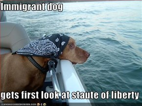 Immigrant dog  gets first look at staute of liberty