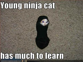 Young ninja cat  has much to learn