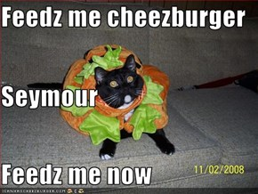 Feedz me cheezburger Seymour Feedz me now