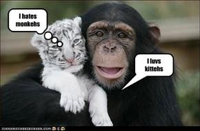 I luvs kittehs