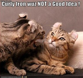 Curly Iron wuz NOT a Good Idea !