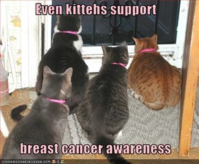 Even kittehs support  breast cancer awareness
