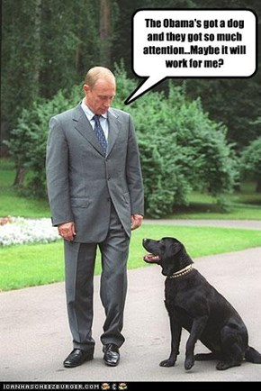 The Obama's got a dog and they got so much attention...Maybe it will work for me?