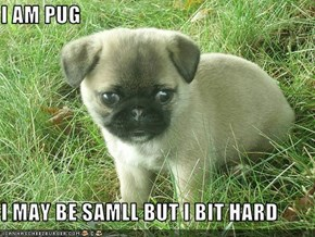 I AM PUG  I MAY BE SAMLL BUT I BIT HARD