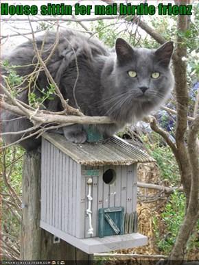 House sittin fer mai birdie frienz