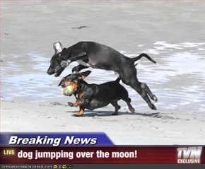 Breaking News - dog jumpping over the moon!