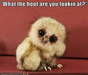 """What the hoot are you lookin at?"""