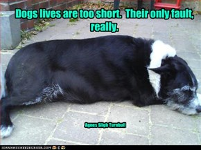 Dogs lives are too short.  Their only fault, really.