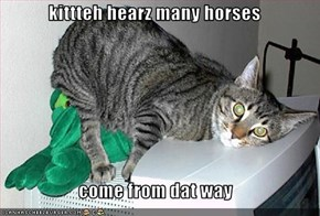 kittteh hearz many horses  come from dat way