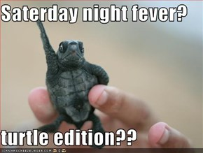Saterday night fever?  turtle edition??