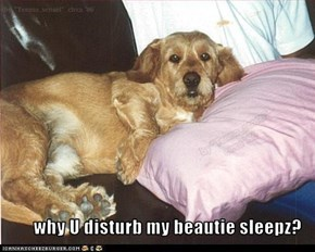 why U disturb my beautie sleepz?