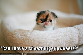 """Can I have a cheezburger pweeezz?"""