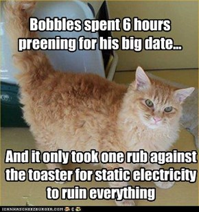 Bobbles spent 6 hours preening for his big date...