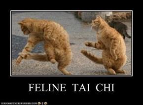 FELINE  TAI  CHI