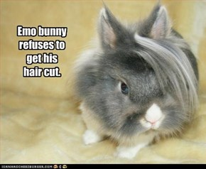 Emo bunny refuses to get his hair cut.