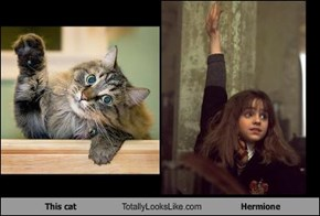 This cat Totally Looks Like Hermione