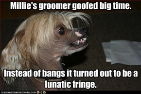 Millie's groomer goofed big time.