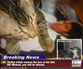Breaking News - Thriller kitteh mourns the loss of his idol.                RIP Michael, you will be missed.