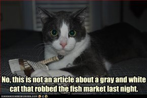 No, this is not an article about a gray and white cat that robbed the fish market last night.