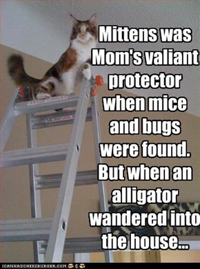 Mittens was Mom's valiant protector when mice and bugs were found.  But when an alligator wandered into the house...