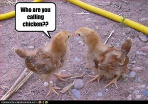 Who are you calling chicken??
