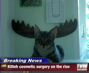 Breaking News - Kitteh cosmetic surgery on the rise