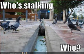 Who's stalking  Who?