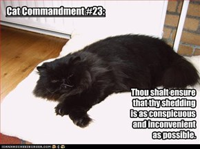 Cat Commandment #23: