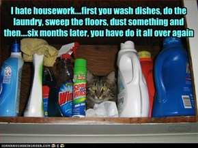 I hate housework....first you wash dishes, do the laundry, sweep the floors, dust something and then....six months later, you have do it all over again