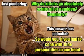 Why do kittehs go absolutely schizo all of a sudden?  Regularly?