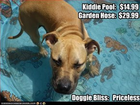 Kiddie Pool:   $14.99 Garden Hose:  $29.99