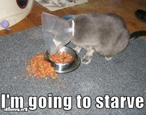 I'm going to starve