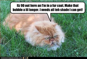 Itz 90 out here an I'm in a fur coat. Make that bubble a lil longer. I needs all teh shade I can get!