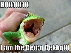 HI!!!1!!!1!!  I am the Geico Gekko!!!