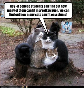 Hey - if college students can find out how many of them can fit in a Volkswagen, we can find out how many cats can fit on a stump!
