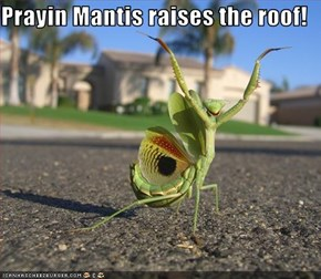 Prayin Mantis raises the roof!
