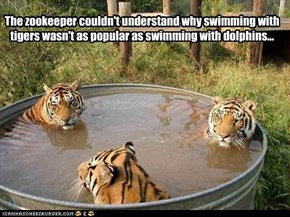 The zookeeper couldn't understand why swimming with tigers wasn't as popular as swimming with dolphins...