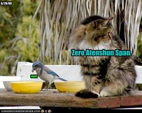 Zero Atenshun Span.